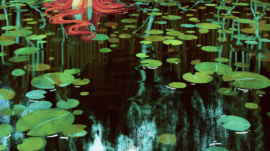 waterlilies_by_camille_marie